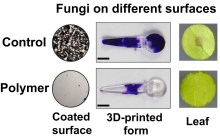 Controlling harmful fungi without the need to use chemical bioactives like fungicides or antifungals