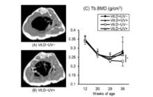 Could LED-based UV irradiation prevent the loss of bone and muscle mass associated with aging?