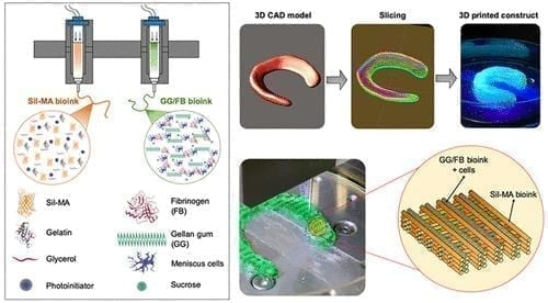 A highly elastic hybrid construct for fibrocartilaginous regeneration is produced by coprinting a cell-laden gellan gum/fibrinogen composite bioink together with a silk fibroin methacrylate bioink in an interleaved crosshatch pattern. CREDIT: WFIRM