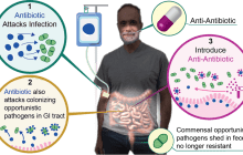 A therapy that may help in the fight against antimicrobial resistance: An anti-antibiotic