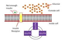 A new insulin molecule can self-regulate blood sugar for better diabetes treatment