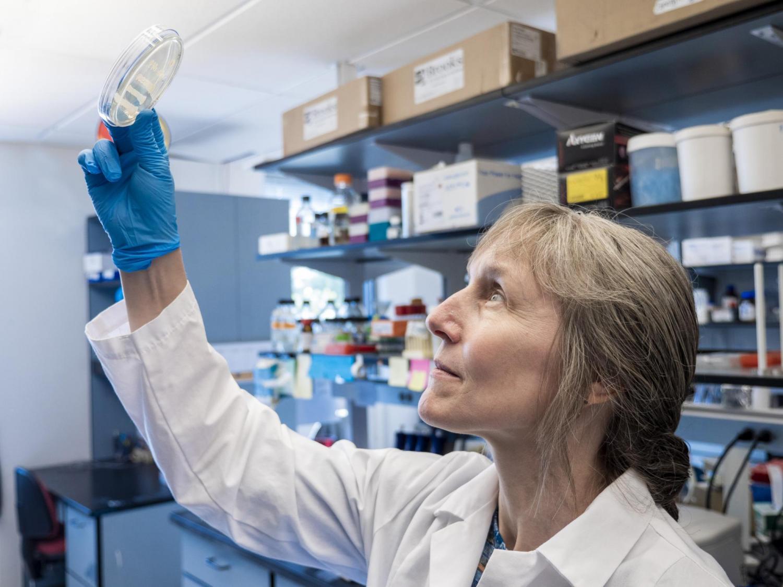 Corrie Detweiler, a professor of molecular, cellular and developmental biology, eyes some samples in the lab. (Photo: CU Boulder)