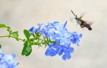 We can help reverse insect decline