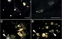 Using bacterial biofilms to trap microplastics