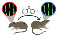 Success in reversing the effects of stress using a non-hallucinogenic psychedelic analog - in mice