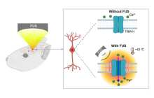 Activating deep brain neurons to control behavior in mice by combining ultrasound and genetics