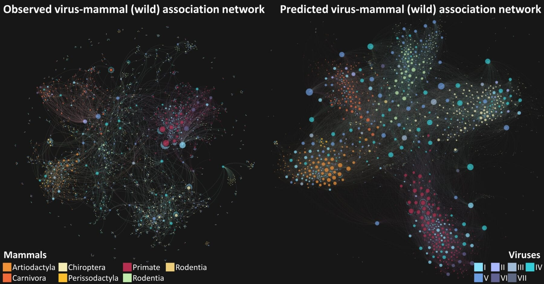 Abstract representation of networks of (1) observed and (2) predicted associations between wild and semi-domesticated mammalian hosts and known virus species. (credit: Dr Maya Wardeh)