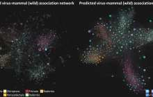 Predicting unknown links between viruses and mammals using AI