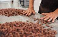 An end to slavery and child labor in the chocolate industry via a new cocoa bean DNA test?