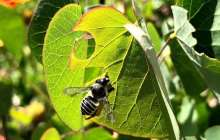 A common insecticide made for commercial plant nurseries is harmful to bees in ANY amount