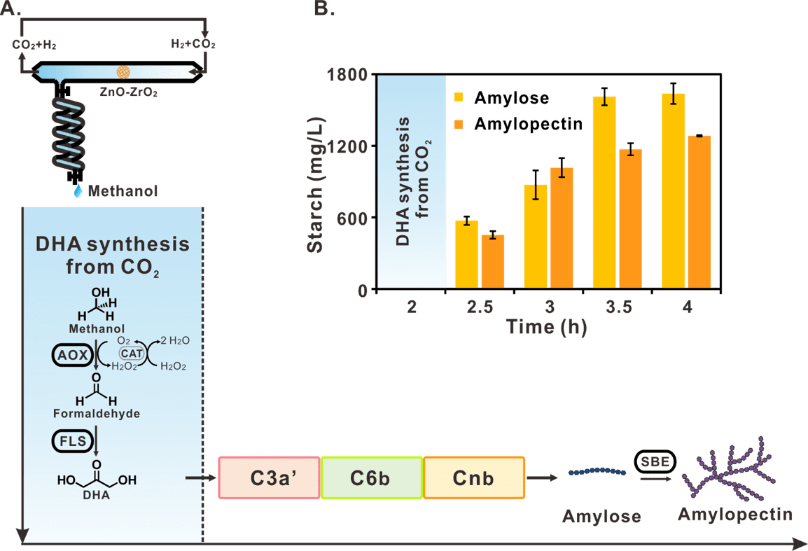 Starch synthesis via artificial starch anabolic pathway (ASAP) from CO2. ( Image by TIBCAS)