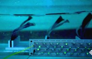 Flexible power generators can mimic the way seaweed sways to efficiently convert surface and underwater waves into electricity