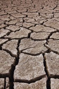 Exoansive soil showing shrinkage cracks
