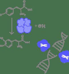 enzyme [ 1200 x 1172 Pixel ]