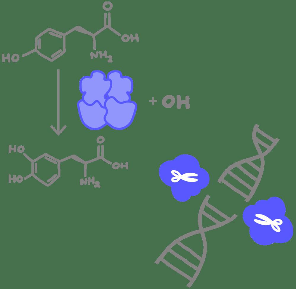 medium resolution of enzyme