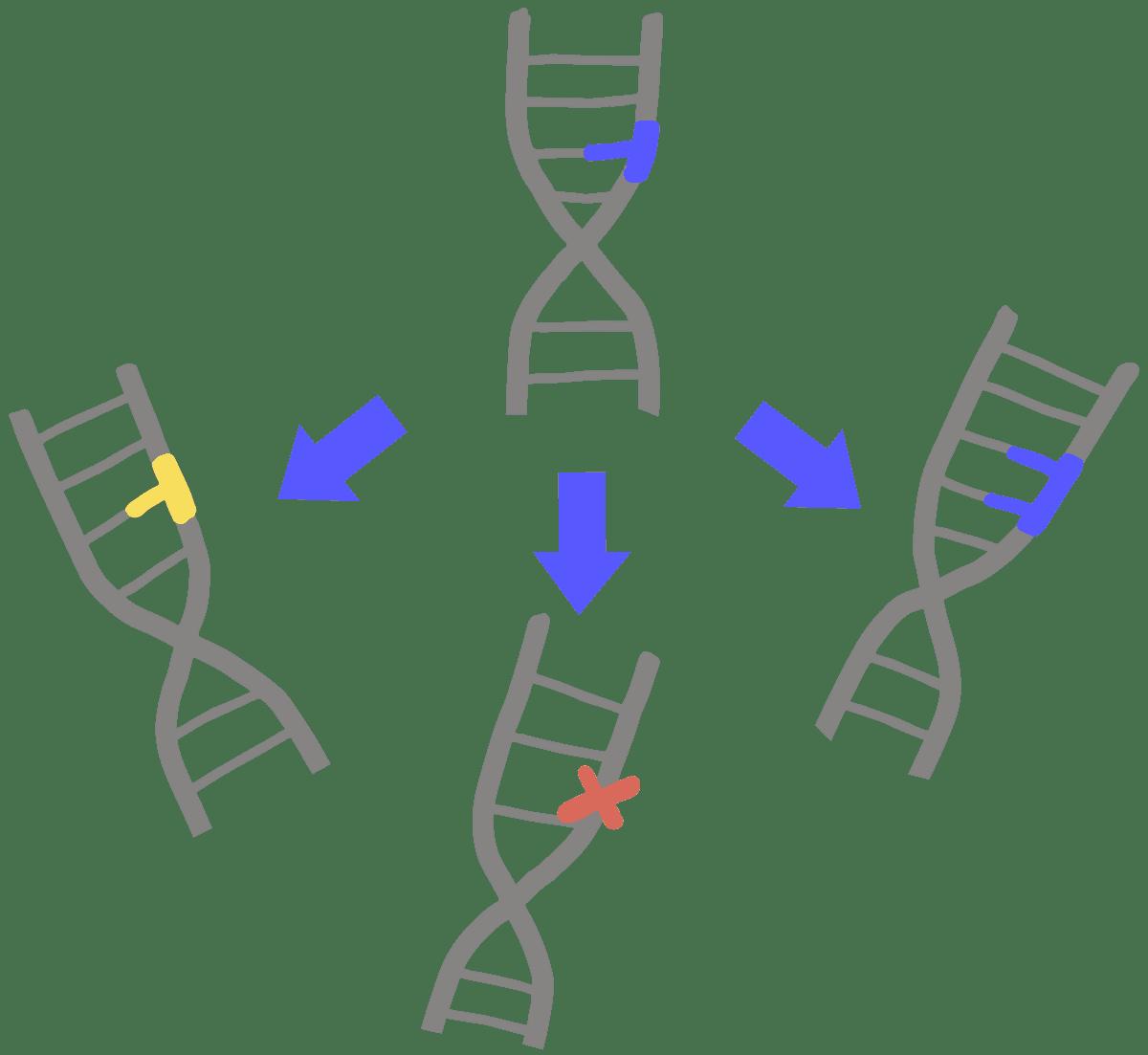 mutation innovative genomics institute