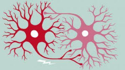 fundamental parts of a neuron