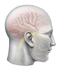 Do you Have Chronic Face, Head and Neck Pain?