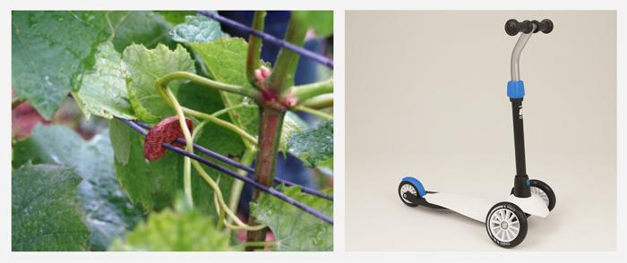 Attache de vigne et trotinnette