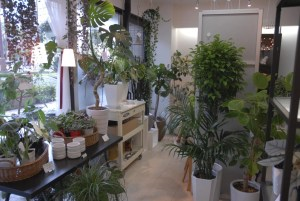 店内 観葉植物