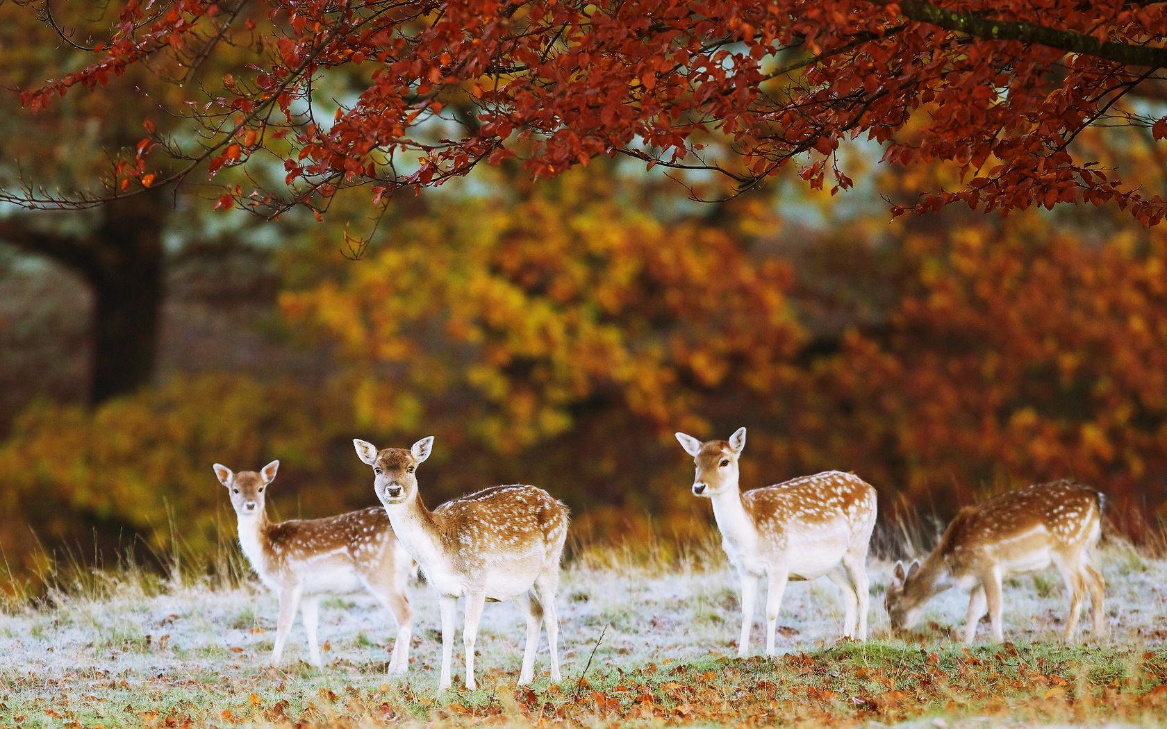 Majestic Fall Wallpaper Animals In Autumn Inotternews Com