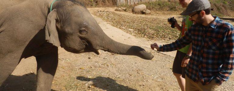 Chiang Mai - Słonie