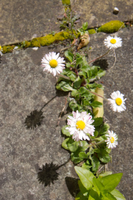 2008-04-20_blarney_26