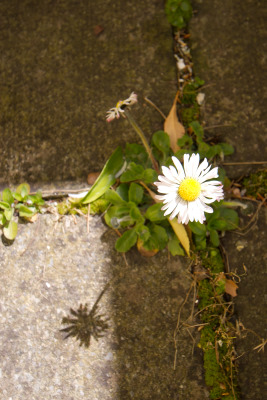 2008-04-20_blarney_29