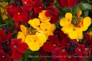 2008-04-20_blarney_14