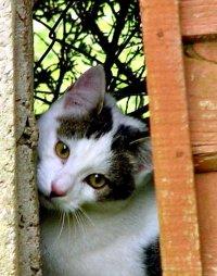 photoblog-20040923