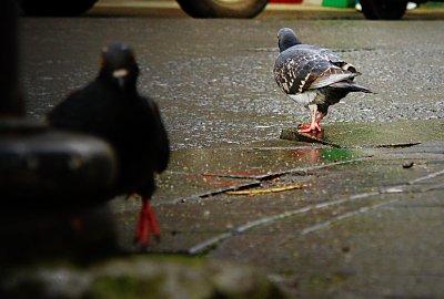 photoblog-20050210