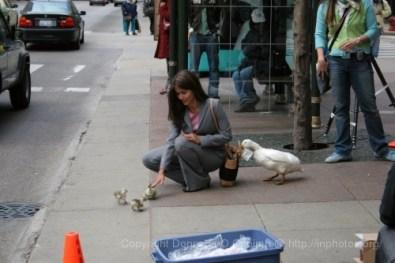 2005-05-16_duck_shoot_2027