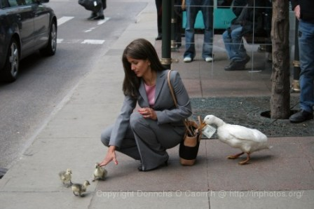 2005-05-16_duck_shoot_2030