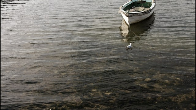 Seagull and the Boat