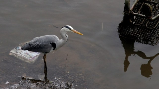 Heron on the river and trolley