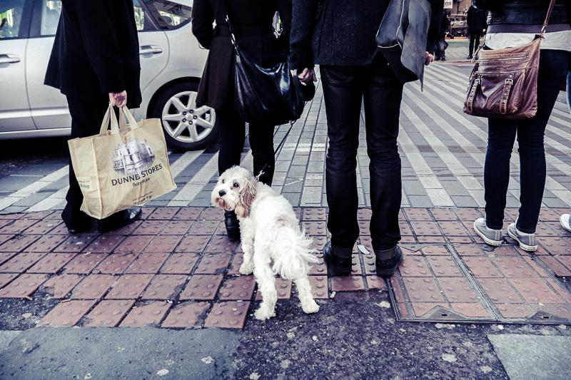 Urban Dog