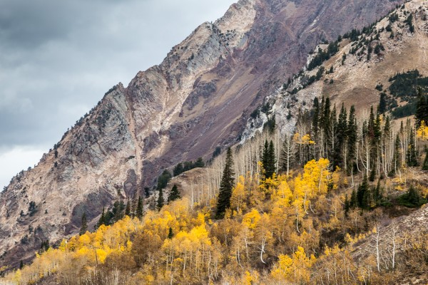 aspen-in-the-mountains