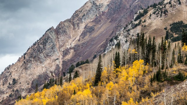 Aspen in the Mountains