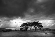Storm Clouds & Trees