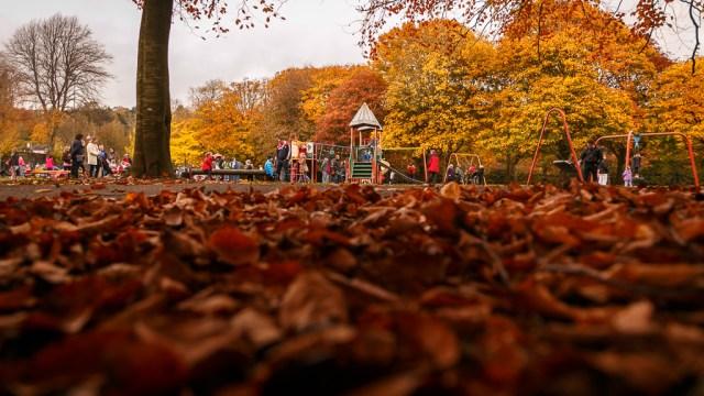 Autumn Colours on the Ground