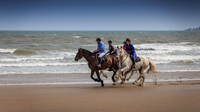 Horses on Youghal Beach