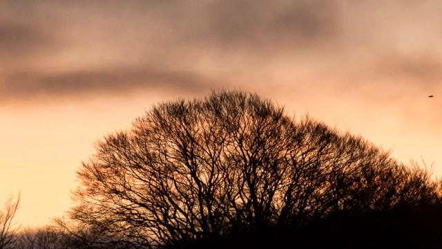 Sunrise in Blarney