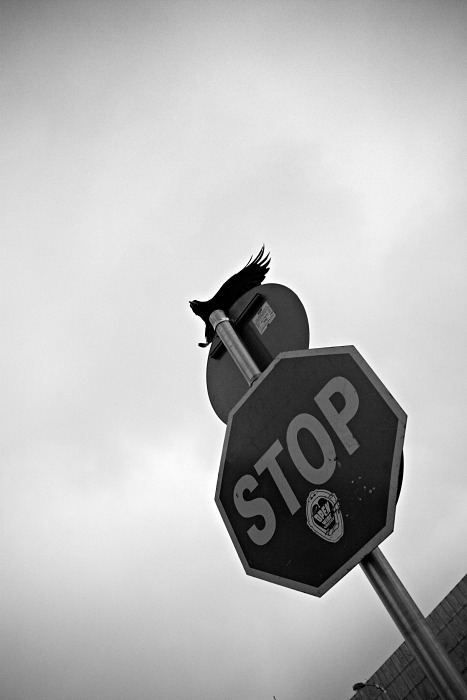 The crow stops here