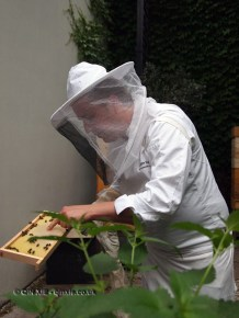 Seppe Nobels with honey comb, Graanmarkt 13, Antwerp, Belgium