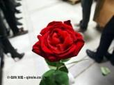 Rose, Azurmendi, Vizcaya