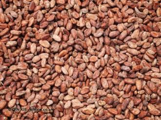 Cocoa beans ready to ship, Loma Sotavento Cacao plantation, Dominican Republic