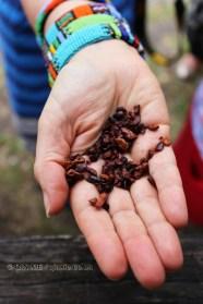 Cocoa nibs, Crayfish Bay, Grenada