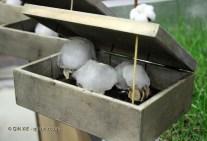 Asparagus cotton, #AtxaAndreRicard at Azurmendi, Larrabetzu