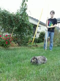 herding bunnies