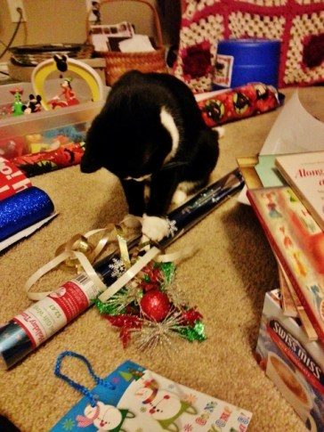 Boots helping me wrap gifts.